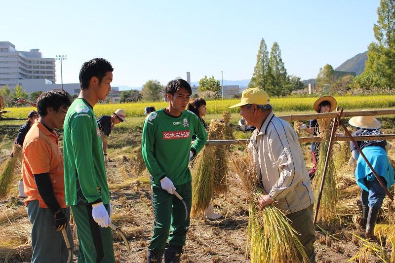 稲刈り (6)