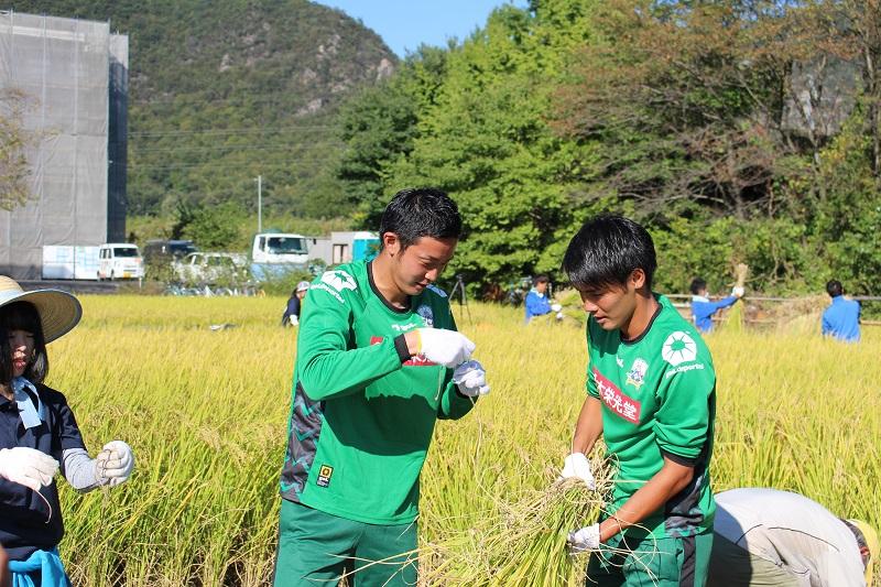 稲刈り (11)