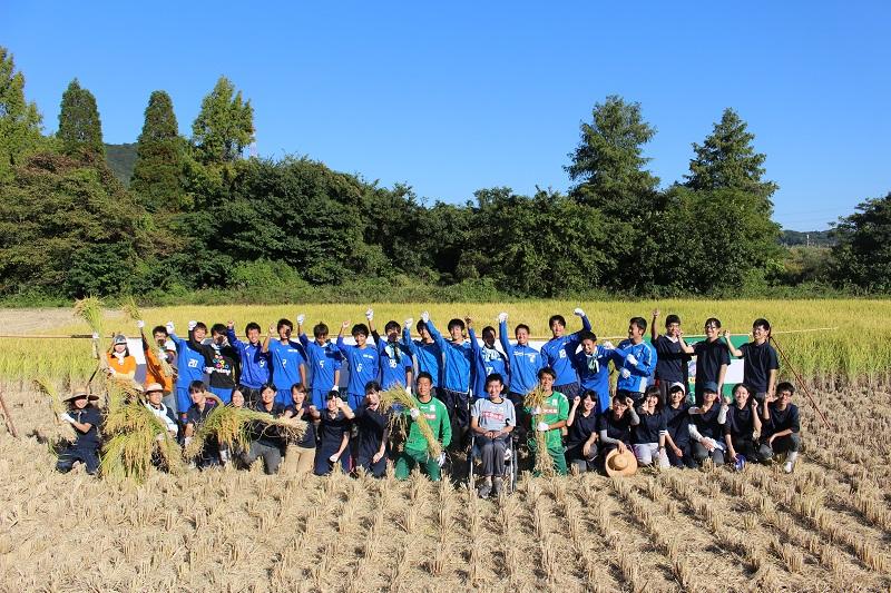 稲刈り(15)